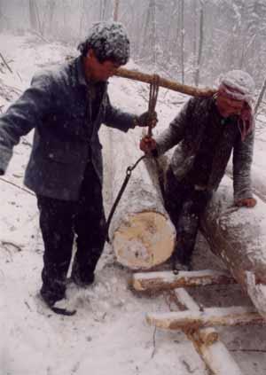 木帮:长白山最后的伐木人