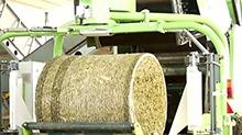 常德:首条牧草饲料生产线建成投产